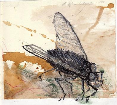 Anders. So klein sie sind - von nahem betrachtet, gewinnen sie enorm, diese erstaunlichen Winzlinge, die uns so schnell davon fliegen. 2011