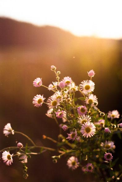 Sonnenuntergang - Blumen