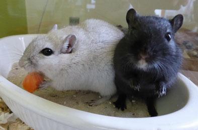 Zwei sehr fotogene Mäuse Jungs, Linus & Steve
