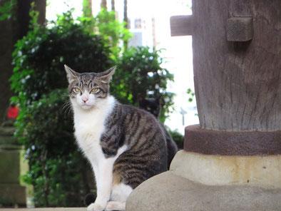 猫、オイルライフ、江古田、練馬、