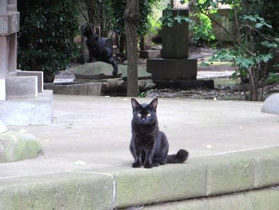 オイルライフ、黒猫、