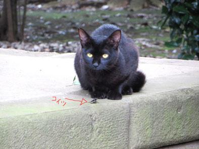 黒猫、オイルライフ、