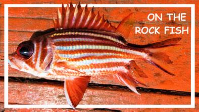 on_the_rock_fish_kambodscha_weltforscher