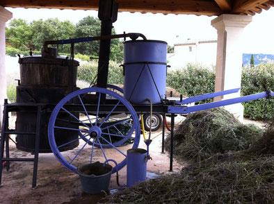 南仏ソーのラベンダー畑で