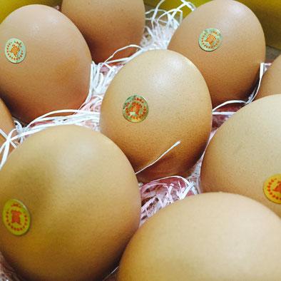 常夏九州九州で育った地鶏卵、マンゴ飼料で育てました。 やっと、送り出すことができるようになりました。 甘く、コクの強さに自信、においもいい香りです。 自信を持ってお勧めできるタマンゴ。 いかがですか?