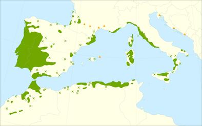 Wo wächst die Korkeiche