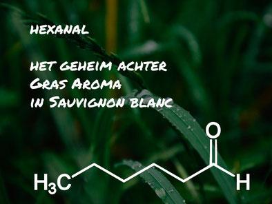 wijnaroma hexanal gras sauvignon blanc