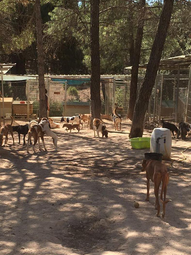 Refuge de Cuenca partenaire de Galgos France