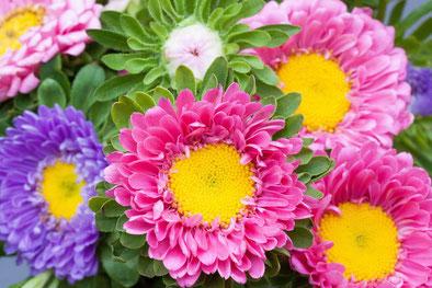 ピンク:甘い夢、紫:私の愛はあなたより深い