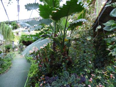 Тропический уголок в Ботаническом саду Иерусалима