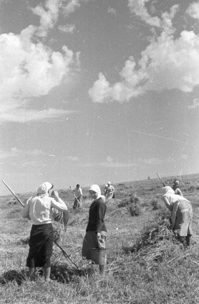 Bessarabische Bäuerinnen bei der Ernte (Foto: Bundesarchiv, B 145 Bild-F016200-34 / CC-BY-SA 3.0, CC BY-SA 3.0)