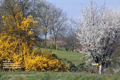 Frühlingsstimmung bei Ettenheim