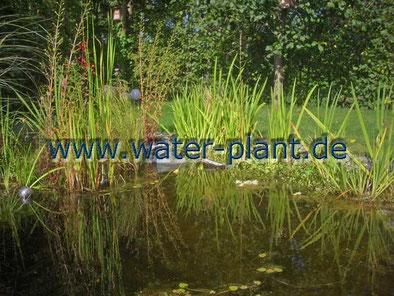 Mit Pflanzmatten gestaltetes Ufer eines Gartenteichs
