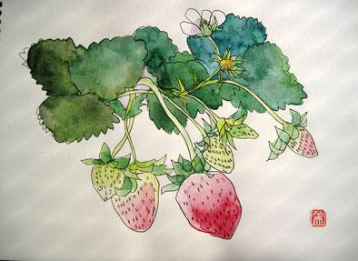 水彩画   春一番のイチゴ