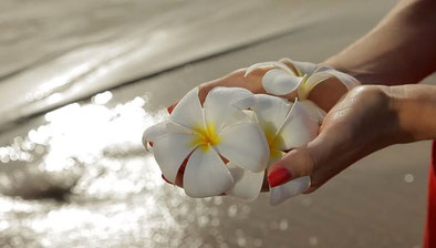 A harmonious picture of a woman at a beach holding fangipani flowers in her hands