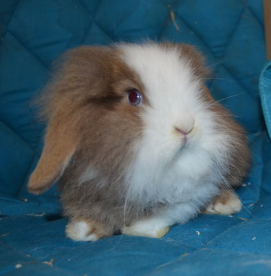 Kaninchen Infos, Aufzucht, Haltung, Pflege