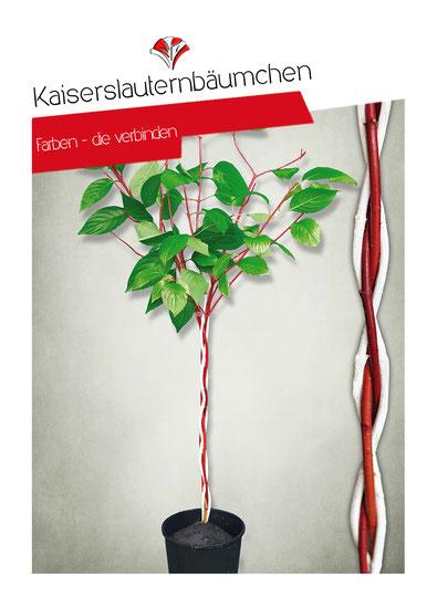 Kaiserslauternbäumchen Rot-Weiß