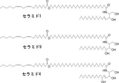 アシルセラミドの構造式