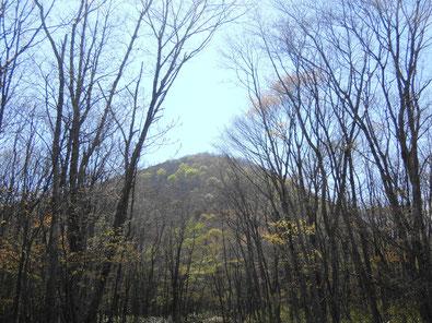 先程までいた山頂を見上げます。