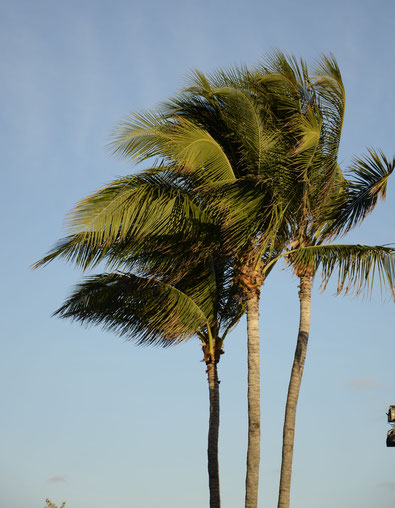 Miami Palm Trees to inspire a trip by PASiNGA