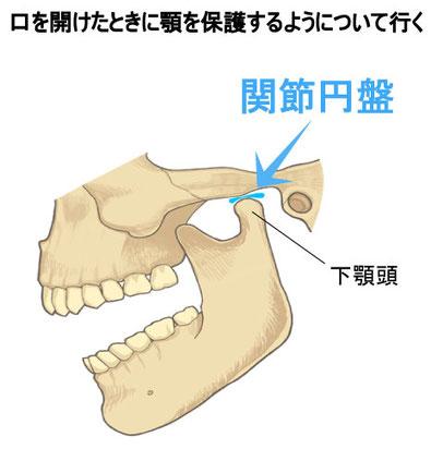 顎関節の関節円盤