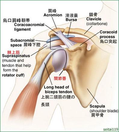 肩の痛み・五十肩