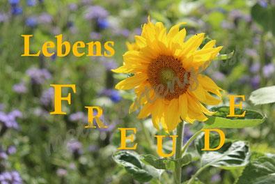 E 3  Lebensfreude  /gelb
