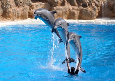 wwaaahouuu (oui des dauphins sur un blog canin et alors ?)