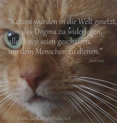 Catsitter mit Herz - Mobile Tierbetreuung Saar - die Katzenfrau