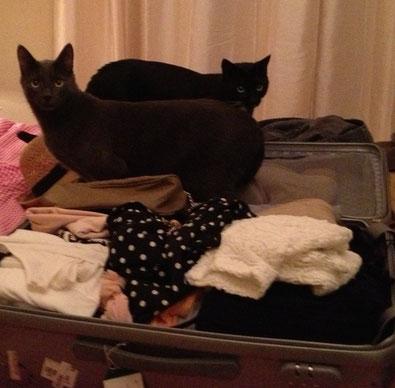 Ich packe meinen Koffer und nehme mit ... zwei Katzen