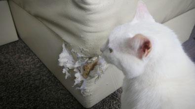 Erstausstattung für Katzen - Kratzmöglichkeiten sind sehr wichtig