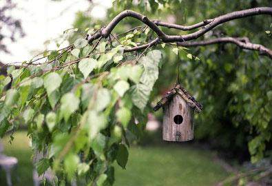 Exceptionnelle durabilité du bois pour votre habitation