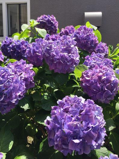 痛くない脱毛サロンDione吉祥寺店 本日撮影、濃い紫に変わってきました