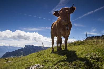 La Villarde est redevenue l'emblème du Vercors ©Parc naturel régional du Vercors