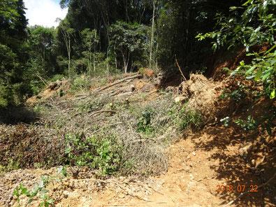 2週間後、消渇神社入口付近、木の除去はじまる。