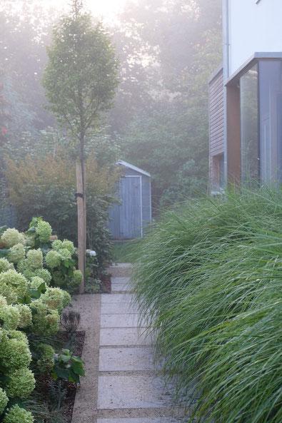dieartigeGARTEN // Nebel im Herbstgarten - Norden, Weg m. Blausteinplatten + Chinaschilf + Hortensien + Säulenbuche
