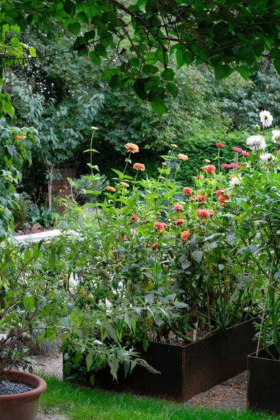 dieartigeGARTEN // July Garden - high beds with dahlias / Hochbeete mit aprikot/pfirsichfarbenen Dahlien