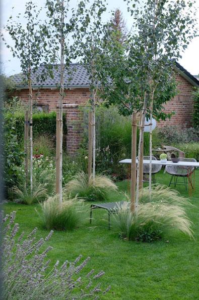 dieartigeGARTEN // garden view with birches + feather grass