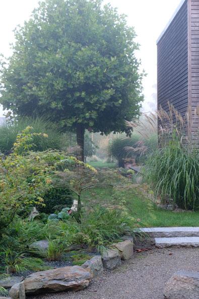 dieartigeGARTEN // Nebel im Herbstgarten - Japangarten mit Japanischem Ahorn + Platanen + Chinaschilf