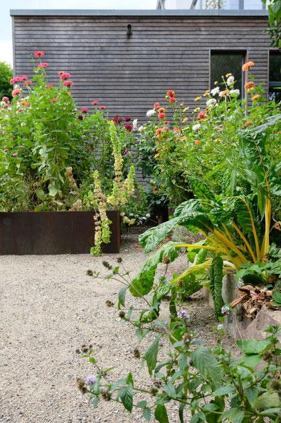 dieartigeGARTEN // July Garden - high beds with dahlias / Kniehochbeete mit Dahlien + Zinnien in aprikot/pfirsichfarben