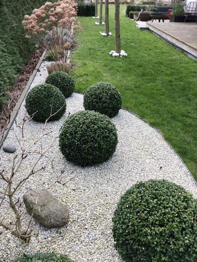 dieartigeGARTEN // März, Frühlingsgarten - Buchsbaum-Kugeln auf hellem Kies + weiße Krokusse unter Platanen