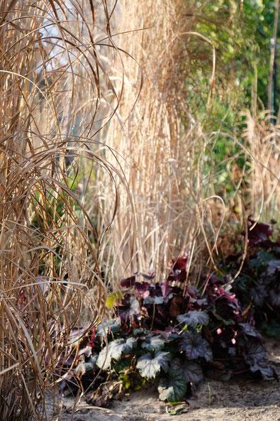 dieartigeGARTEN // Januar, Wintergarten - Rutenhirse + Purpurglöckchen