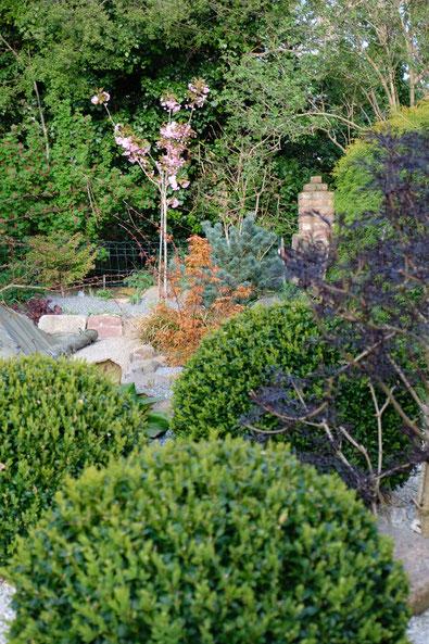 dieartigeGARTEN // April Frühlingsgarten - Buchskugelbeet + Schwarzer Holunder + Japanische Zierkirsche