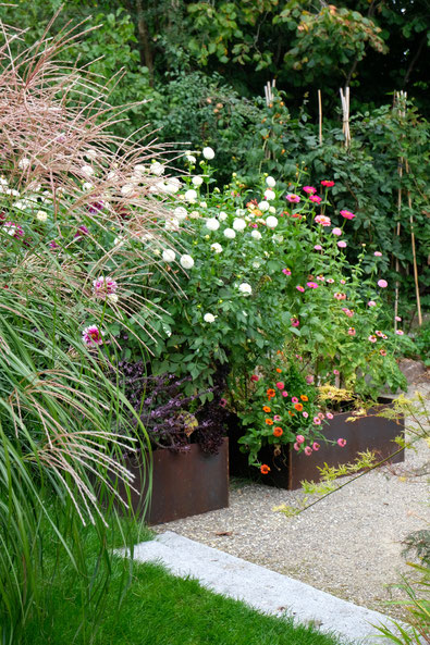 dieartigeGARTEN // August Garden - high beds with dahlias+zinnia / das Chinaschilf begleitet die Spätsommerblüten