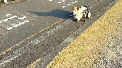 犬の車椅子 犬用車椅子 犬の車いす 犬用車いす 犬の車イス 犬用車イス 犬 車イス 車椅子 車いす 歩行器 ドッグカート 車椅子犬