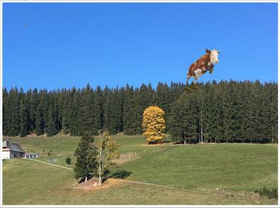 Herbst-Kuh beim Alm-Abtrieb