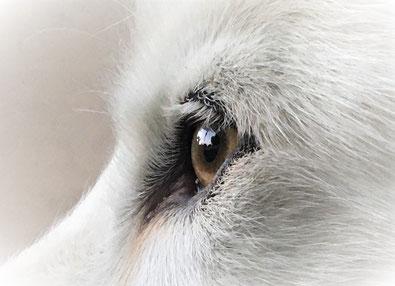 """Das Auge des """"Schneesturm`s"""""""