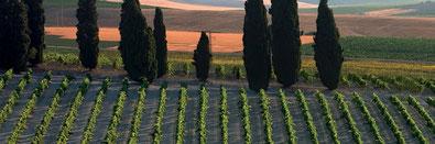 気候とワインの関係 (www.vinetur.com)