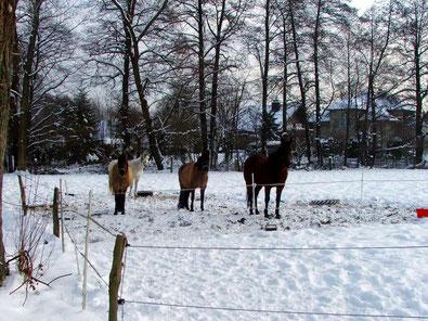 Winter bei Hörste © Lippe Tourismus & Marketing GmbH