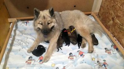 Mama IRA mit ihren 9 Welpen (Foto: Kennel Eurobisern)